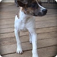 Adopt A Pet :: Elsa - Ijamsville, MD