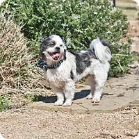 Adopt A Pet :: Jax - Pearland, TX
