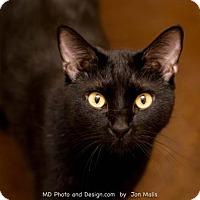 Adopt A Pet :: Maranda *Declawed* - Scottsdale, AZ