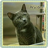 Adopt A Pet :: Walden - Atco, NJ