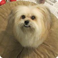 Adopt A Pet :: Perry - Mukwonago, WI