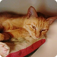 Adopt A Pet :: Twitches - Franklin, NH