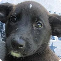 Adopt A Pet :: Claissa - Germantown, MD