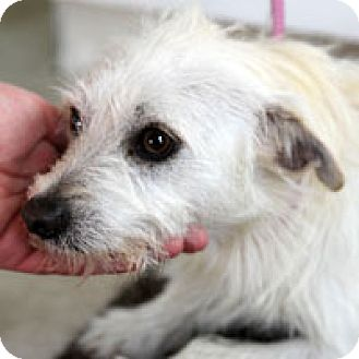 Terrier (Unknown Type, Medium) Mix Dog for adoption in Pacific Grove, California - George