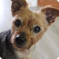 Adopt A Pet :: MINDY - Toronto, ON