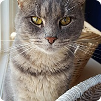 Adopt A Pet :: Margaret Catwood - Salisbury, MA