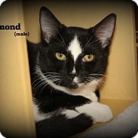 Adopt A Pet :: Diamond - Springfield, PA