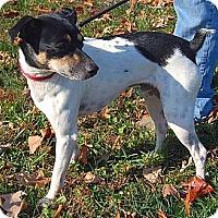 Adopt A Pet :: Dewey - Boise, ID