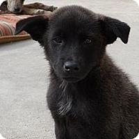 Adopt A Pet :: Winnie - San Diego, CA