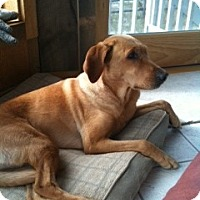 Adopt A Pet :: Lu'sea - PENDING, in Maine - kennebunkport, ME
