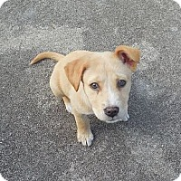 Adopt A Pet :: Pam - Ormond Beach, FL