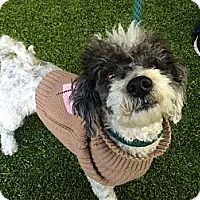 Adopt A Pet :: Barney - Mission Viejo, CA