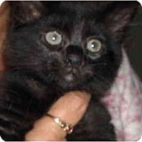 Adopt A Pet :: Kebra - Riverside, RI