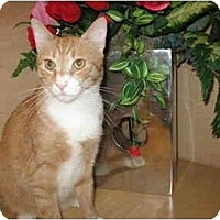 Adopt A Pet :: Bristol - Jenkintown, PA