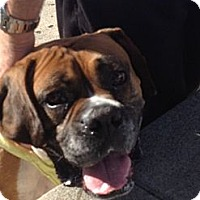 Adopt A Pet :: Ralph - Mission Viejo, CA