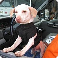 Adopt A Pet :: Machete - Fowler, CA