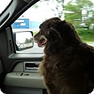 Adopt A Pet :: Pudge (COURTESY POST)