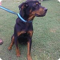 Adopt A Pet :: Bonnie - Rexford, NY
