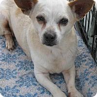 Adopt A Pet :: Humphrey - Phoenix, AZ