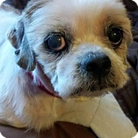 Adopt A Pet :: Sammy - Crocker, MO