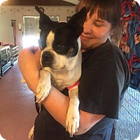 Adopt A Pet :: Christie - Weatherford, TX