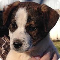 Adopt A Pet :: Kato - Spring Valley, NY