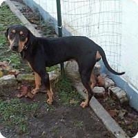 Adopt A Pet :: Dakota - Seahurst, WA