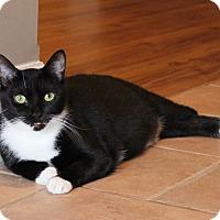 Adopt A Pet :: Jozy - Carlisle, PA