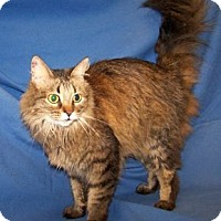 Adopt A Pet :: K-Talia2-Keela - Colorado Springs, CO