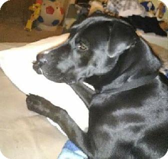 Labrador Retriever Mix Dog for adoption in Austin, Texas - Lydia