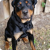 Adopt A Pet :: Jaiden - Mason, MI