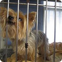Adopt A Pet :: Chanel (Cocoa Center) - Cocoa, FL