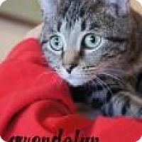 Adopt A Pet :: Gwendolyn - Newport, KY
