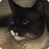 Adopt A Pet :: Aries - Manchester, NH