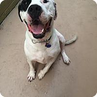 Adopt A Pet :: Sunshine - Beverly Hills, CA