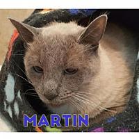 Adopt A Pet :: Martin - Pittsburgh, PA