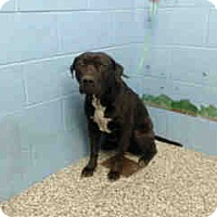 Adopt A Pet :: URGENT ON 1/18  San Bernardino - San Bernardino, CA