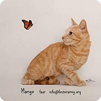 Adopt A Pet :: Mango - Riverside, CA
