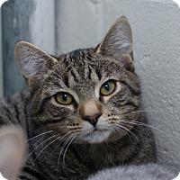 Adopt A Pet :: Sam - Greenwood, SC