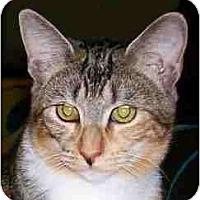 Adopt A Pet :: Savannah - Duluth, GA