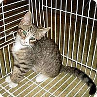 Adopt A Pet :: Kiki - Kirkwood, DE