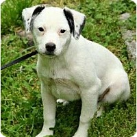 Adopt A Pet :: Collin - Staunton, VA