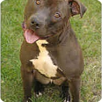 Adopt A Pet :: Bubba - Chicago, IL