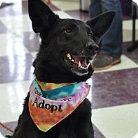 Adopt A Pet :: Keeba - Colorado Springs, CO