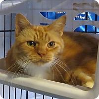 Adopt A Pet :: Tiger3 - Geneseo, IL