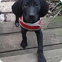 Adopt A Pet :: Widget - Staunton, VA
