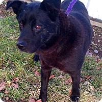 Adopt A Pet :: Dexter - Metamora, IN