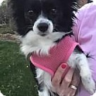 Adopt A Pet :: Snookie (in Maryland)