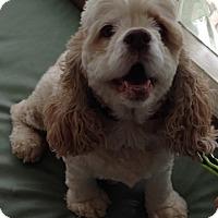 Adopt A Pet :: Brenna -Adopted! - Kannapolis, NC