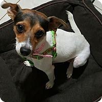 Adopt A Pet :: Sissy - Pompton Lakes, NJ